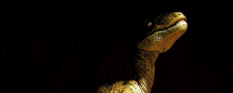 Get Papo Velociraptors from Dan's Dinosaurs!